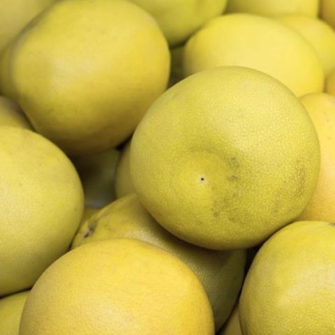 Oro Blanco Grapefruit