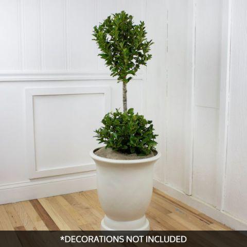 Oakland™ Holly Pom Pom Topiary